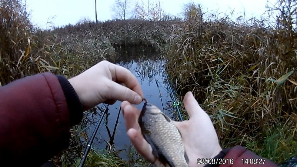 Ловля карася на болота