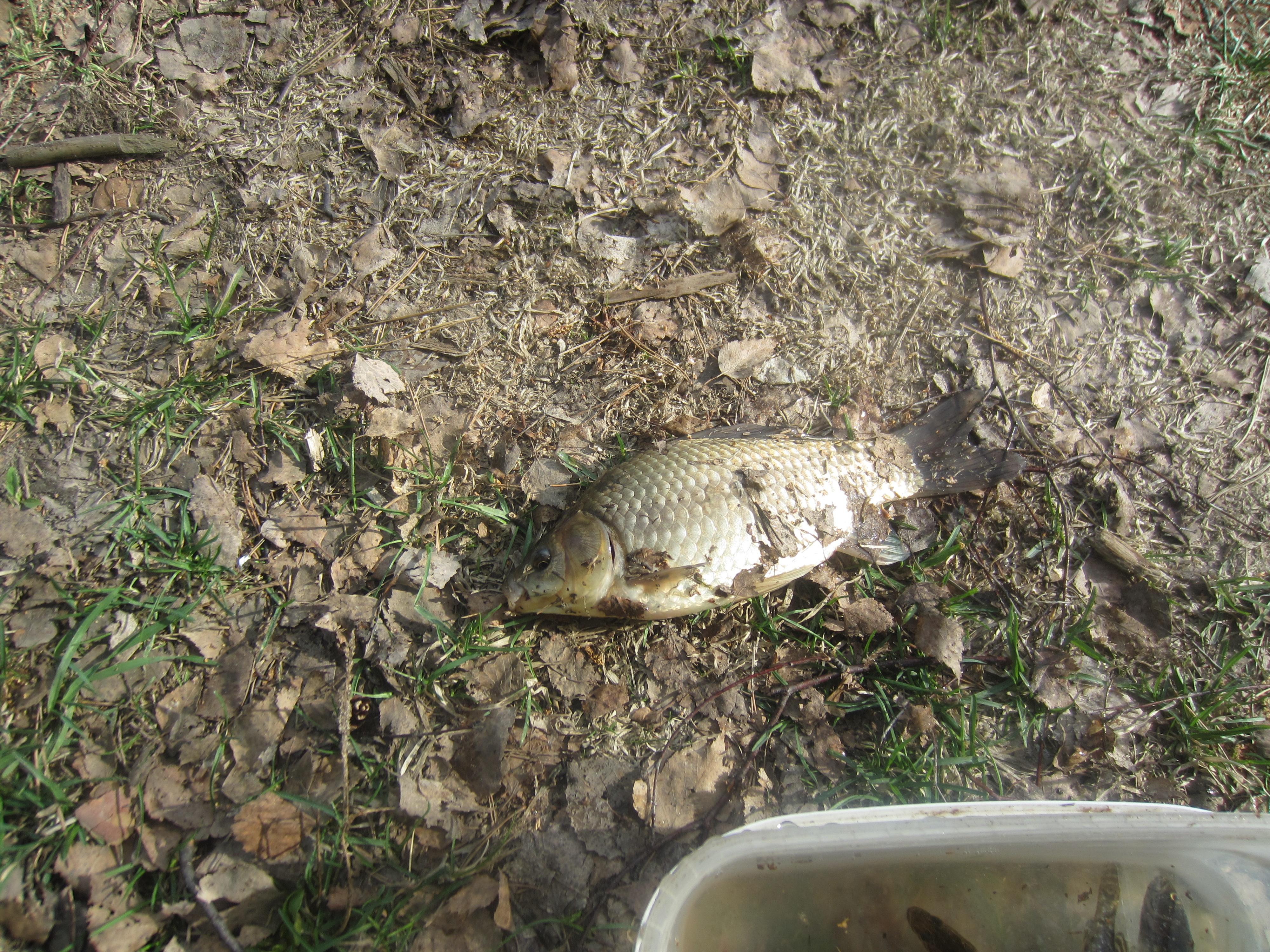отчеты о рыбалке иваново 2015